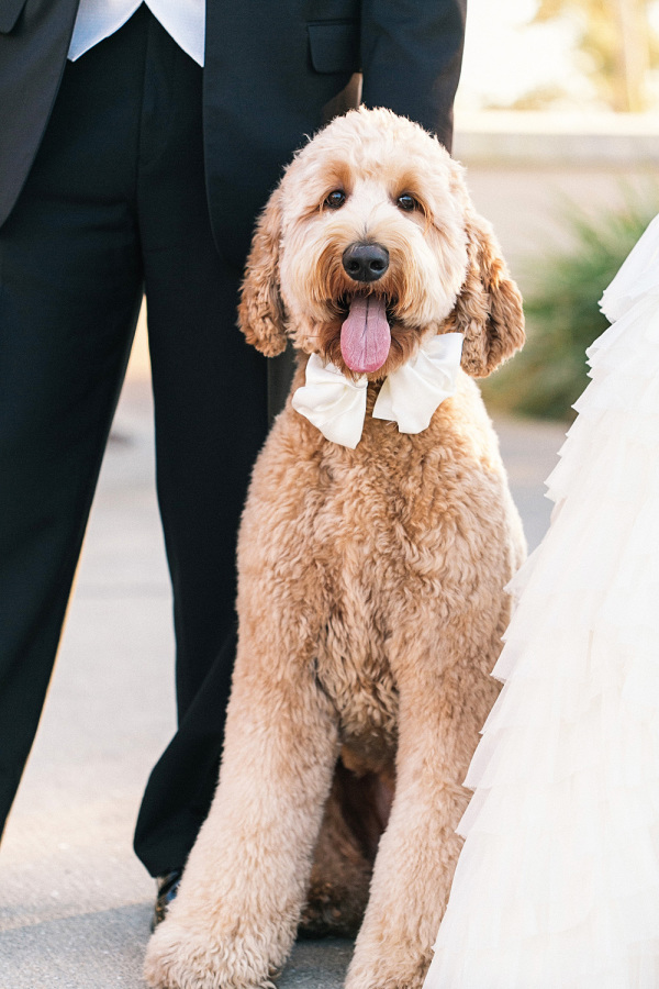 15 Dogs Who Stole the Show in Florida Couples' Photos